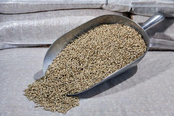 Grain barley whole